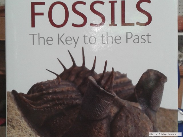 The Old Forge Fossil Shop - Books, Maps & Posters